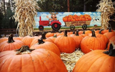 There are many seasonal activities you can have fun doing this fall.